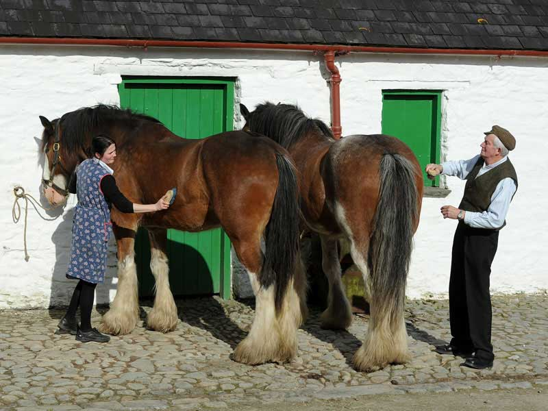 Visit Muckross Traditional Farms